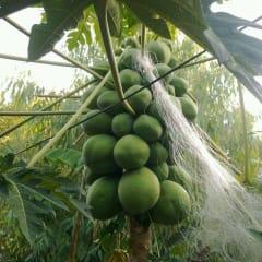 Hoi An eco tour - harvest vegetables