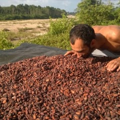 cacao farmers in Thailand