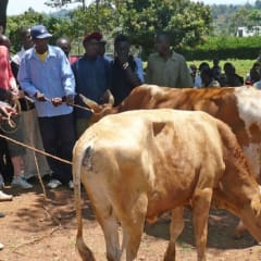 connect with Kenyan farming locals