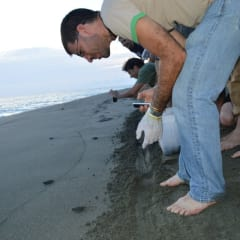 sea turtle hatchlings Pacific Ocean