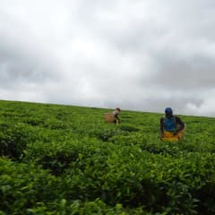 Uganda tradition - traditional activities