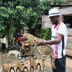 Uganda tours - Uganda wildlife