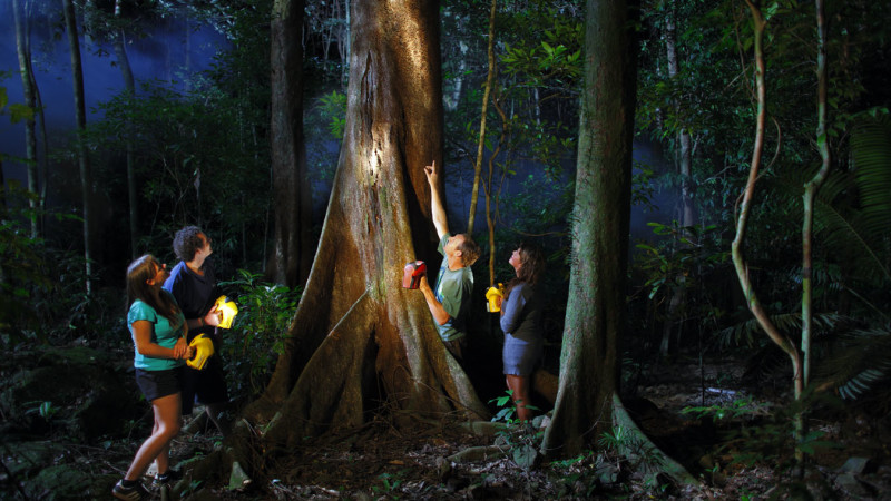jungle night walk adventure 2 hours. Black Bedroom Furniture Sets. Home Design Ideas