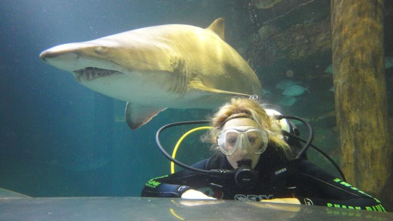 shark diving at manly sea life sanctuary weekday. Black Bedroom Furniture Sets. Home Design Ideas