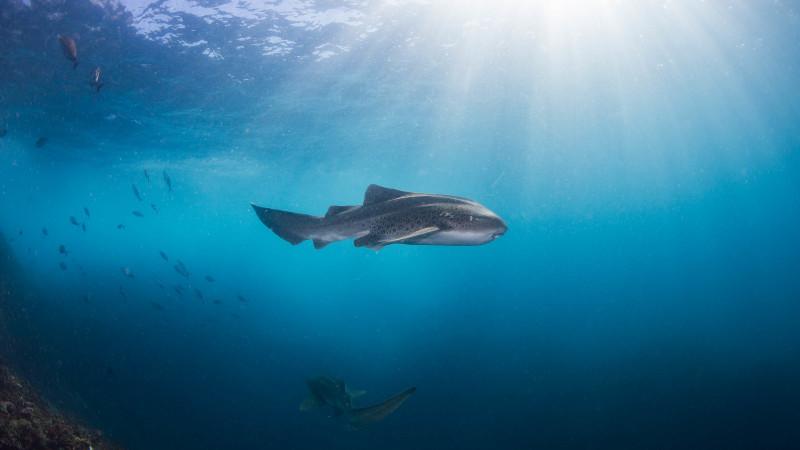 Sea turtle snorkel tour at julian rocks - Dive byron bay ...