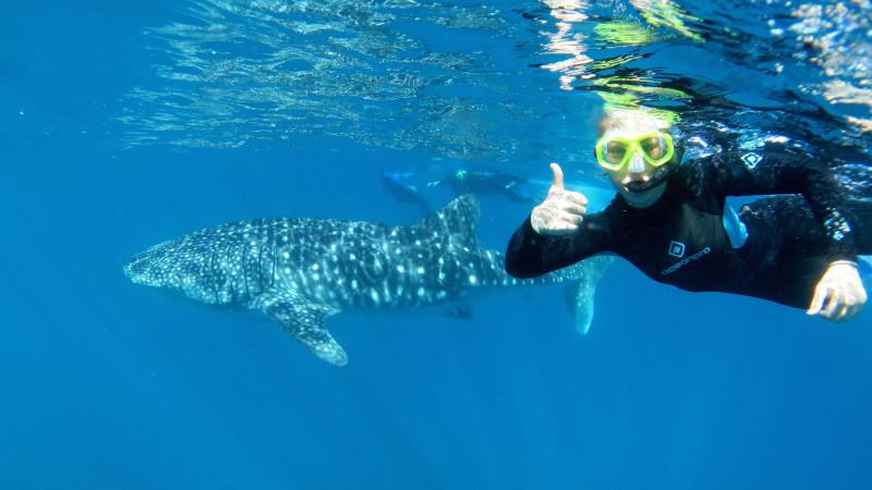 Redballoon Whale Shark Swim...