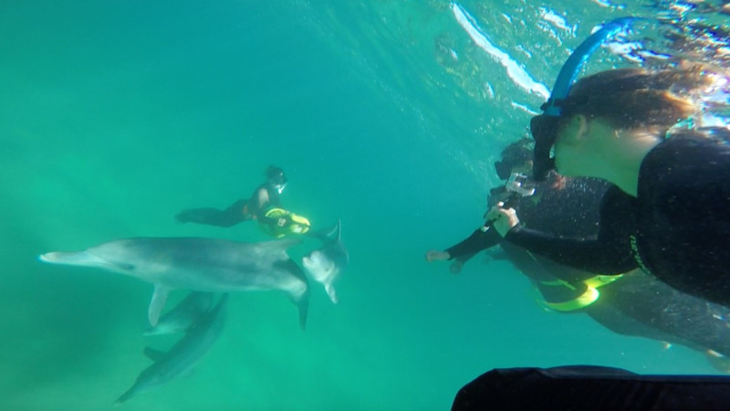 swim with the dolphins in sydney - photo#2