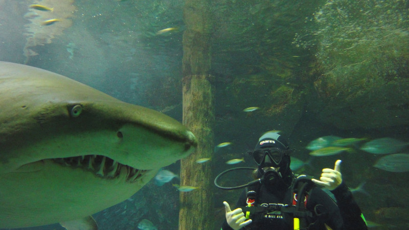 shark diving at manly sea life sanctuary weekend. Black Bedroom Furniture Sets. Home Design Ideas