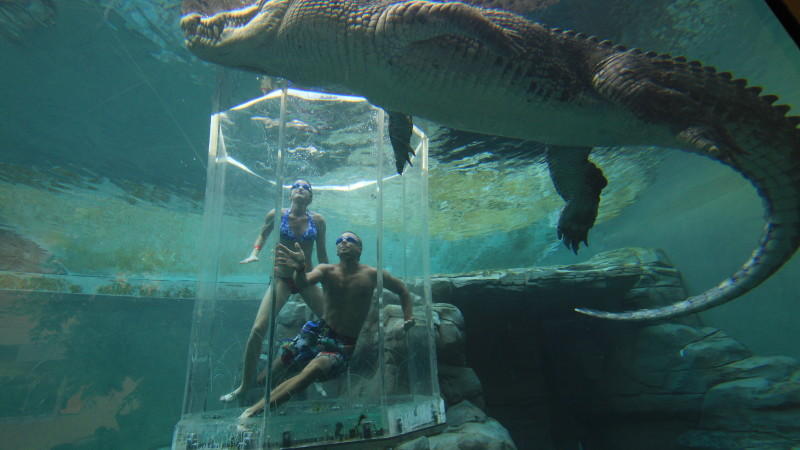 Crocodile Cage Of Death At Crocosaurus Cove For 2