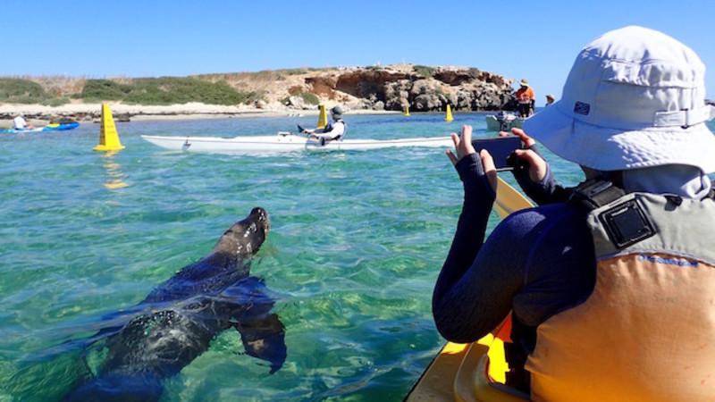 Seal Island Tour Perth