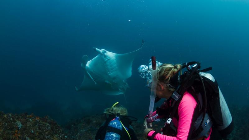 Scuba dive at julian rocks certified divers only - Dive byron bay ...