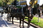 Romantic Horse Drawn Carriage Ride