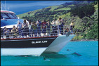 Nature Cruise at Akaroa Harbour