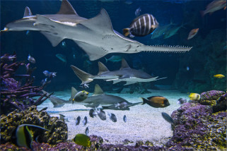 Private VIP Tour Of Sydney Aquarium - For 2