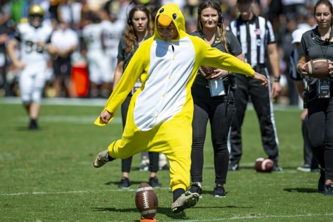 GoldandBlack - Meet the duck who who kicked his way to $500