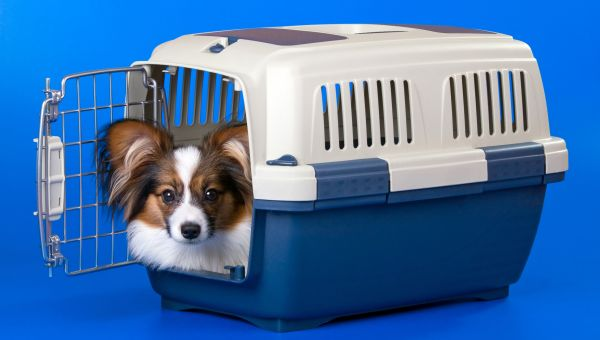 Look for pet-friendly shelters