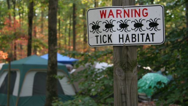 Does a Tick Bite Necessarily Mean You'll Get Lyme Disease?