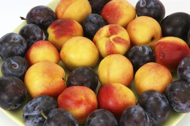 Better-Than-Blueberries Fruit
