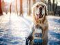 11 Winter Pet Health Hazards to Avoid