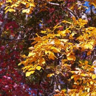 Naturalist Niche: Fall Ridge Hike