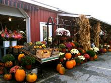 Paulus Farm Market Fall-220