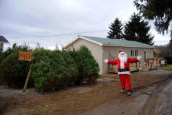 Painter Pines Christmas Tree Farm