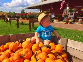 Little boys sits in pumpkins at Wickham farms
