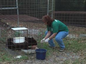 Big Cat Feeding
