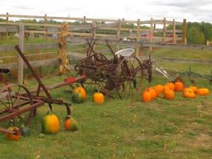 Fruit Ridge Hayrides in Grand Rapids
