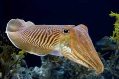 319_1556_cuttlefish.jpg