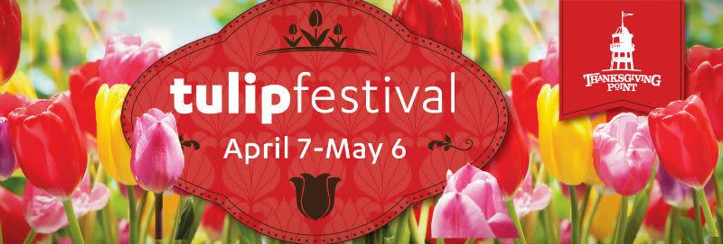 Tulip Festival 2 2017