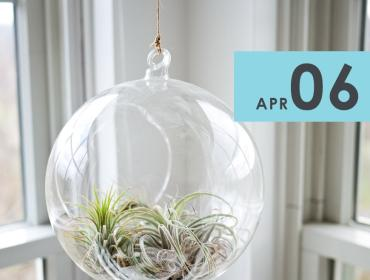 Air Plant Terrarium Workshop