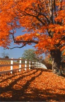 fall_foilage.jpg