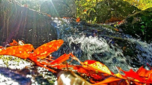 Fall Orange Leaf - Fall Photo