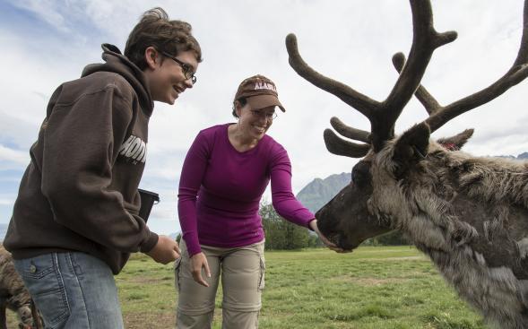 Afbeeldingsresultaat voor SUMMER reindeer farm