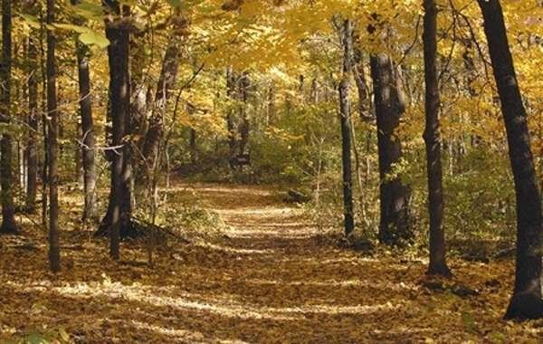 UW-Madison Arboretum Walk: Tour of the Lost City.
