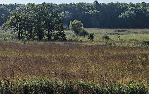 UW-Madison Arboretum Family Nature Program: Effigy Mounds.