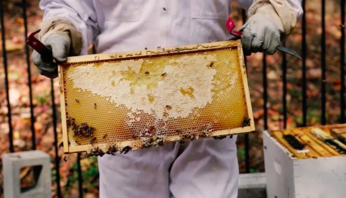 Mayor Bees