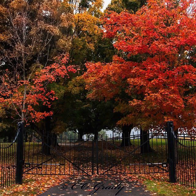 Fall Colorful Driveway - Fall Photo