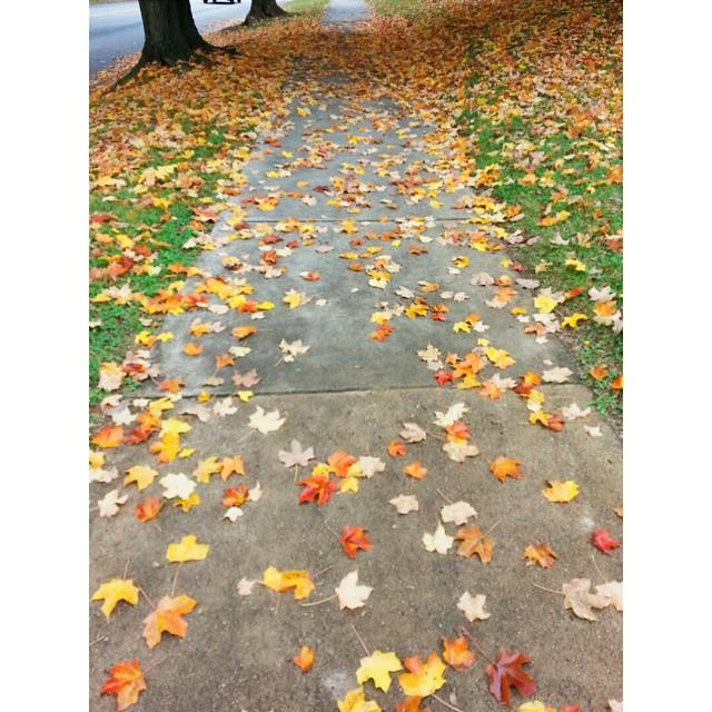 Leaves on Sidewalk - Fall Photo