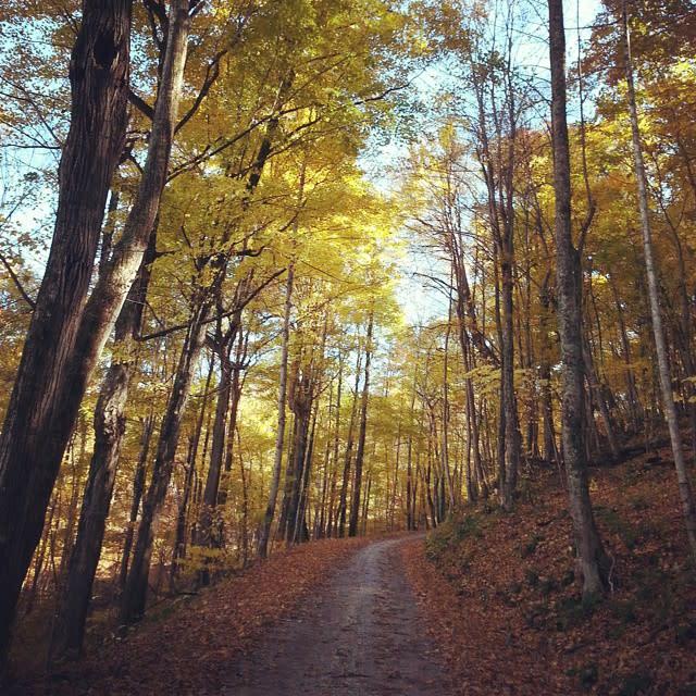 Yellow Trees - Fall Photo