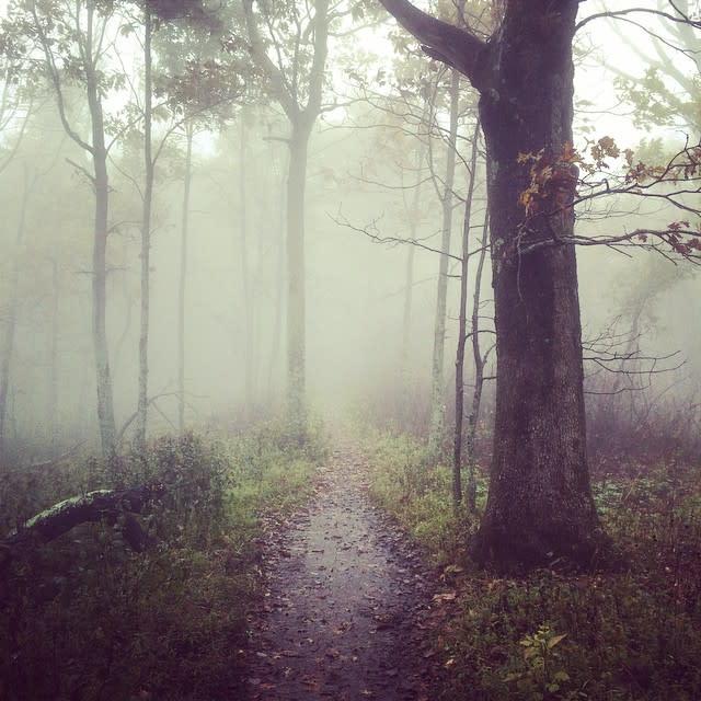 Peaks of Otter Fog Trail - Fall Photo