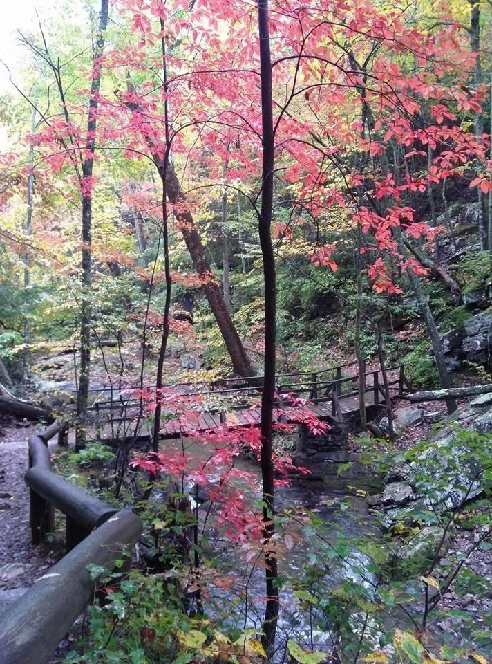 Roaring Run Trail - Fall Photo