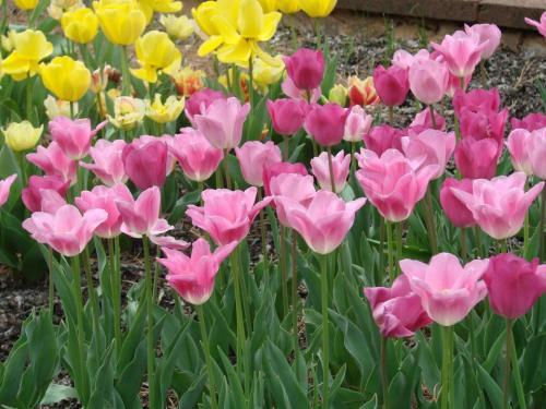 Asheville Bloom News