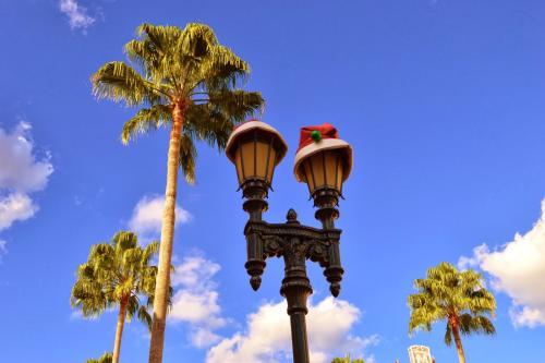 Holiday Extravaganza: Hyde Park Photo Safari