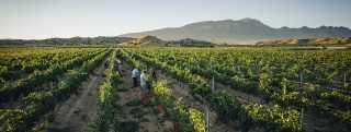 Wine Trail header