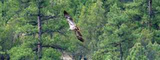 Birding Header