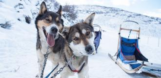 First Timers Dog Sledding Header
