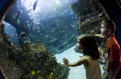NC Aquarium at Fort Fisher