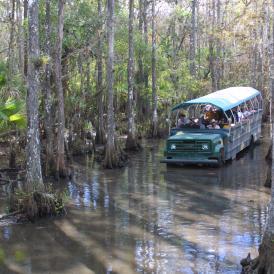 Babcock Wilderness Adventures - Telegraph Cypress Swamp